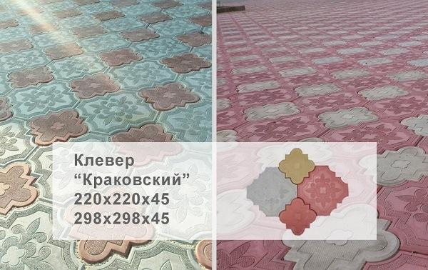 фото размеров Краковский клевер