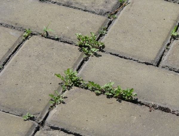 трава в межплиточных швах